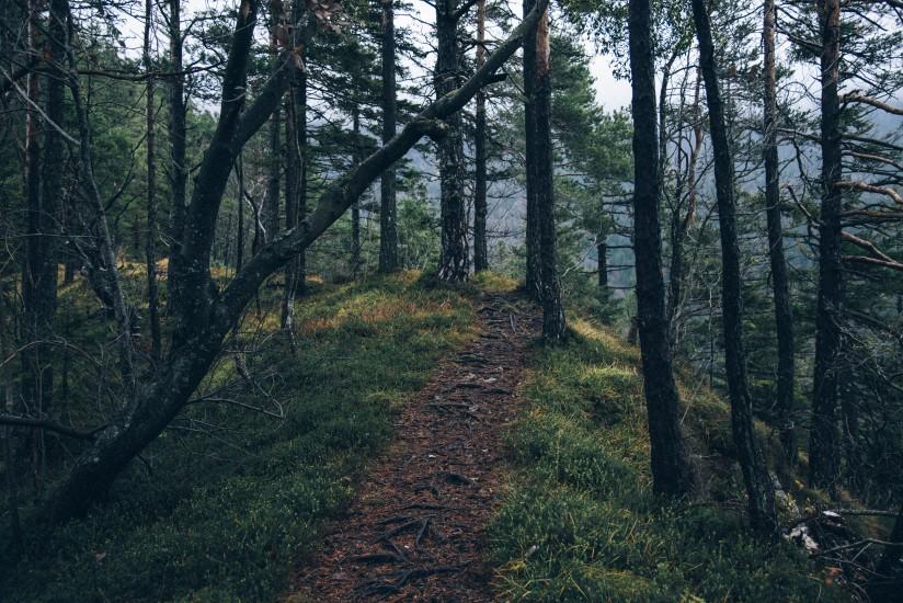Adventure forest nature 4029 824x550 novelda today - Contactos novelda ...